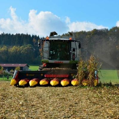 ZIEGLER-Corn-Champion1
